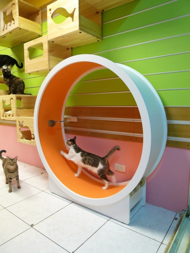 catswall-a-modular-cat-climbing-wall-perfect-for-you-pet